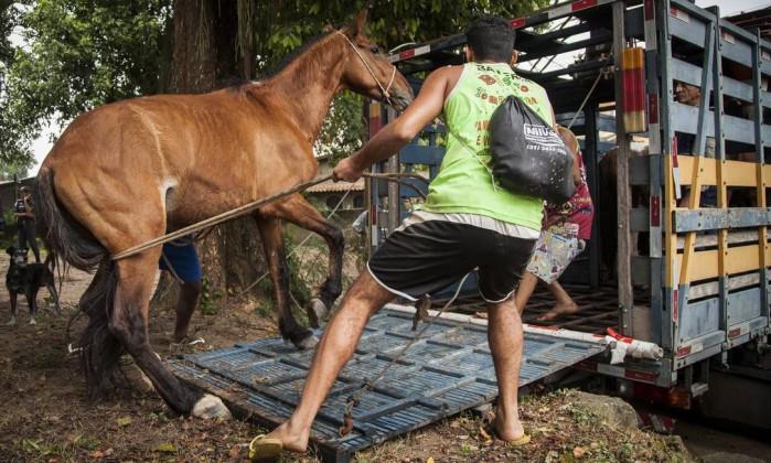 cavalo-paqueta.jpg